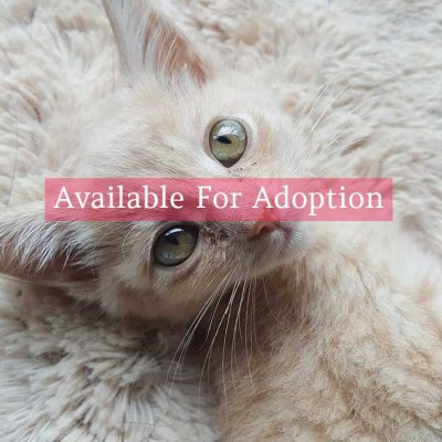 Available-for-adoption-white