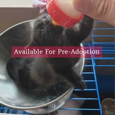 available-for-pre-adoption